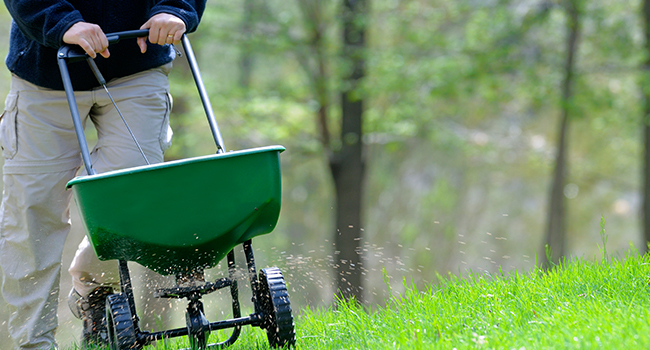 Fertilizing, feeding, Weed Control